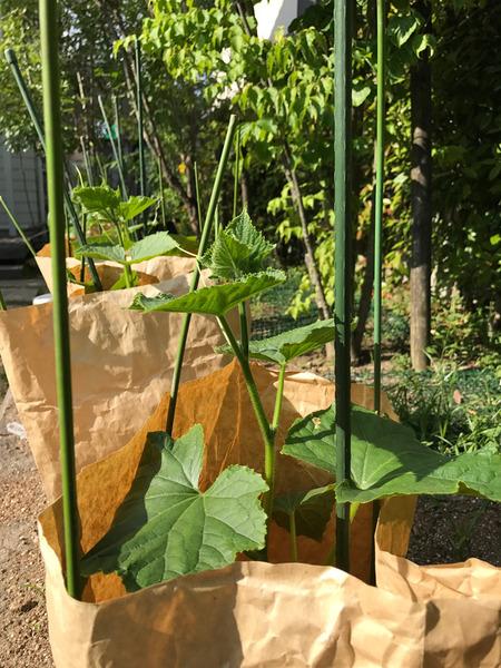 アラタvegetable garden