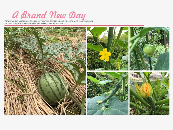 アラタvegetable garden 2017初夏