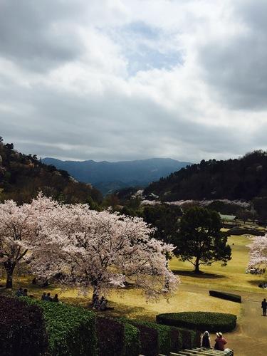 神山森林公園と花見弁当