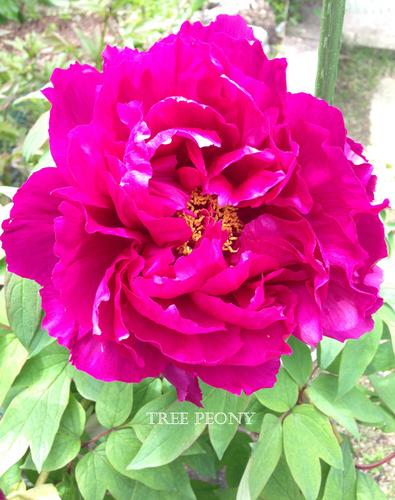 しらさぎ台サロンの花々