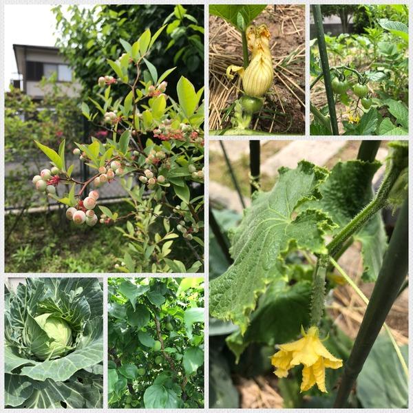 アラタvegetable garden2018